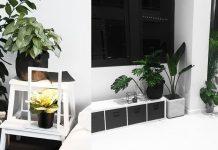 My Favourite Indoor Plants [+TIPS] // Rachel Aust